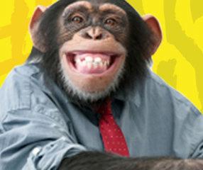 alessia-marcuzzi-francesco-facchinetti-la-scimmia