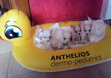 valerio-scanu-cani