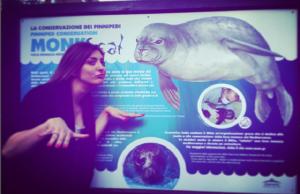 foto-karin-bonucci-foca