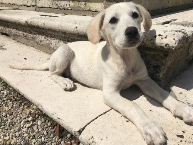 Oscar Branzani cane