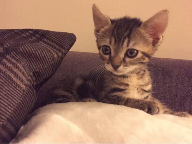Il gattino di Serkan e Ozge - Cherry Season