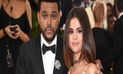 selena e the weeknd adottano un cane