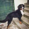 cane alessandra amoroso