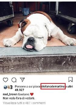 stefano de martino cane di emma