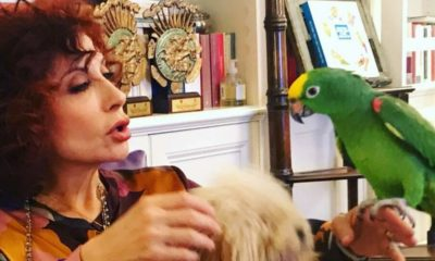 il pappagallo di alda d'eusanio
