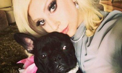 lady gaga, selfie con il cane